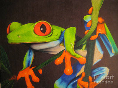 Rainforest Drawing - Red Eye Tree Frog by Brian Schuster