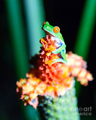 Tree Photograph - Red-eyed Frog Macro - Costa Rica by Matteo Colombo