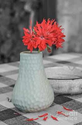 Photograph - Red Flower In White Jug. by Fine art Photographs