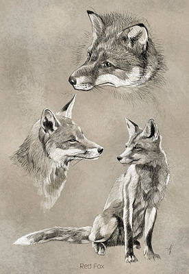 Red Foxes Drawing - Red Fox by Arie Van der Wijst