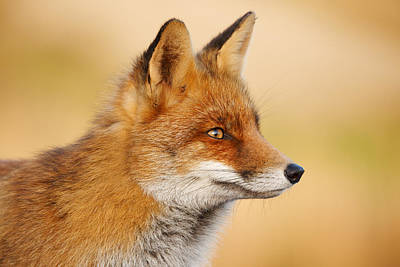 Red Fox Face Print by Roeselien Raimond
