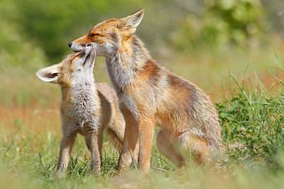 Red Fox Love Print by Roeselien Raimond