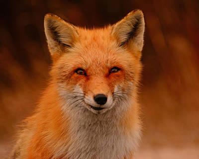Photograph - Red Fox by Raymond Salani III