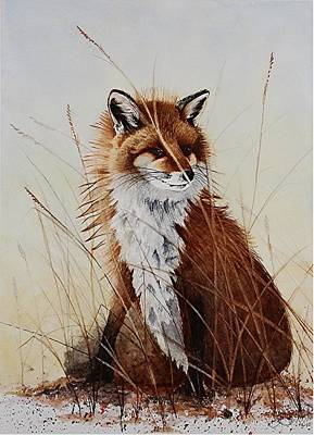 Red Foxes Drawing - Red Fox Waiting On Breakfast by Jimmy Smith