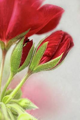 Red Geranium Flowers Print by Jennie Marie Schell