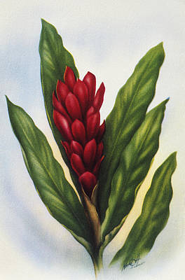 Hawaiian Legacy Archive Painting - Red Ginger by Hawaiian Legacy Archive - Printscapes