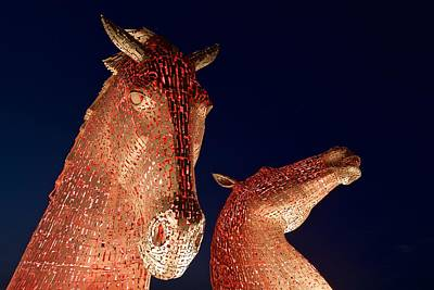 Kelpie Digital Art - Red Heads by Stephen Taylor