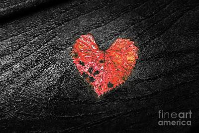 Photograph - Red Heart by Traci Law