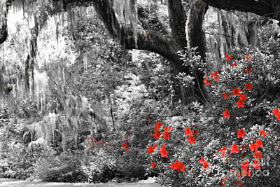 Photograph - Red In The Garden by Patti Whitten