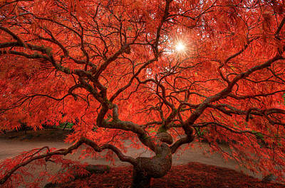 Tree Photograph - Red Lace by Dan Mihai