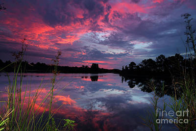 Photograph - Red Morning Sly by Rick Mann