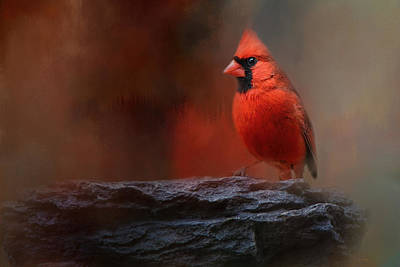 Red Photograph - Red On The Rocks - Cardinal Bird Art by Jai Johnson