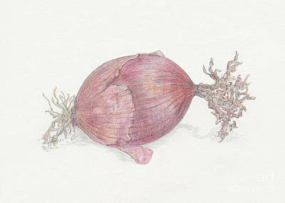 Onion Drawing - Red Onion by Tara Poole