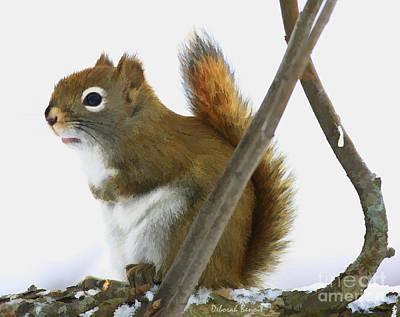 Squirrel Mixed Media - Red Pondering by Deborah Benoit