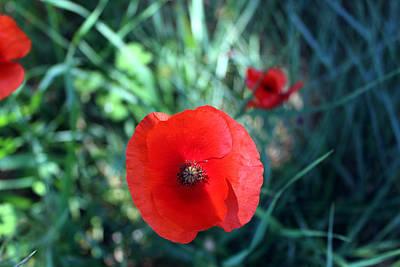 Poppy Photograph - Red Poppy by K McCoy