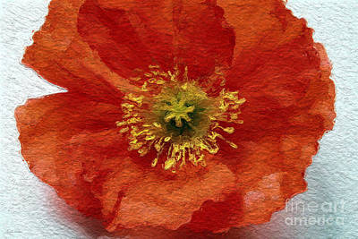 Yellow Mixed Media - Red Poppy by Linda Woods