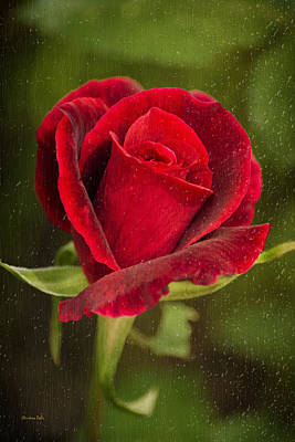 Glass Wall Digital Art - Red Rose Behind Wet Glass by Christina Rollo