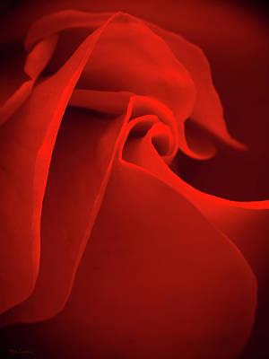 Red Rose Macro Print by Wim Lanclus