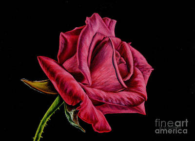 Florals Drawing - Red Rose On Black by Sarah Batalka