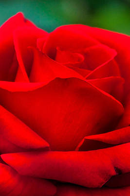 Red Rose Petals 2 Print by Az Jackson