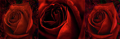 Tryptych Photograph - Red Rose Tryptych by Nareeta Martin