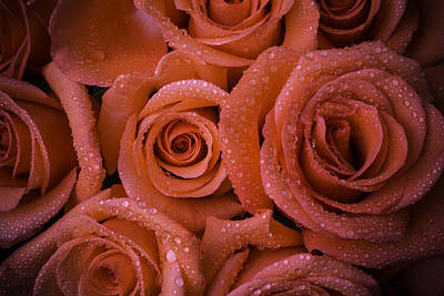 Red Rose Wet With Dew Print by Garry Gay