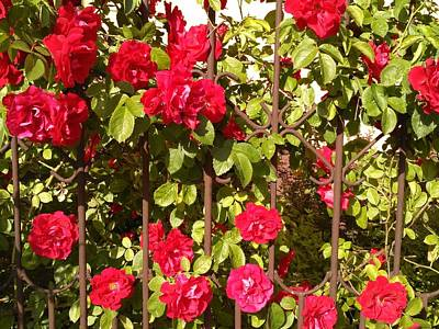 Roses Photograph - Red Roses In Summertime by Arletta Cwalina