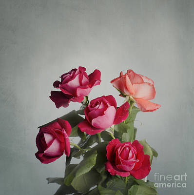 Red Roses Print by Jelena Jovanovic