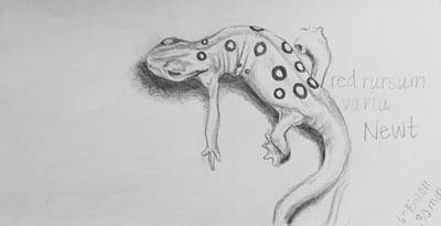 Newts Drawing - Red Rursum Varia by Sarah Mushong