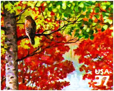 Soaring Painting - Red-shouldered Hawk by Lanjee Chee