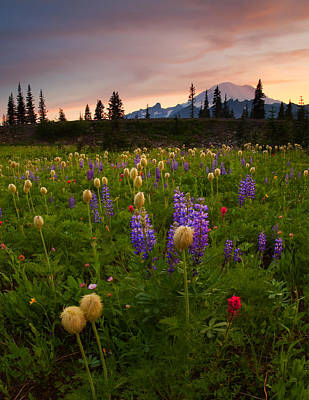 Lupine Photograph - Red Sky Meadow by Mike  Dawson