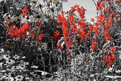 Photograph - Red Snapdragons by Patti Whitten
