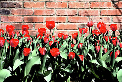 Red Spring Tulips 2 Print by Angelina Vick