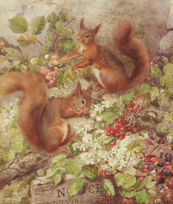 Red Squirrels Gathering Fruits And Nuts Print by Rosa Jameson