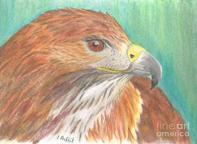 Yellow Beak Drawing - Red Tailed Hawk by Isabel Proffit