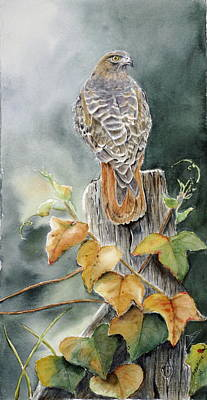 Red Tail Hawk Painting - Red-tailed Hawk Lookout by Patricia Pushaw