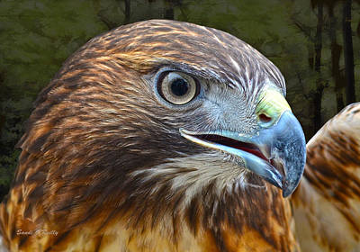 Red-tailed Hawk Portrait Print by Sandi OReilly