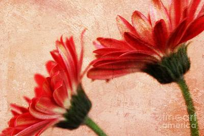 Gerbera Photograph - Red Texture 2 by Clare Bevan