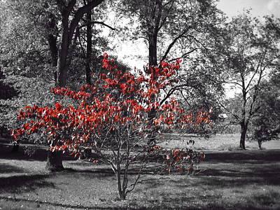 Burning Bush Photograph - Red by Toni Jackson