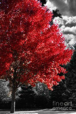 Red Tree Original by Mindy Sommers
