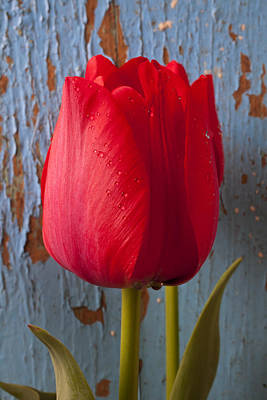 Chip Photograph - Red Tulip by Garry Gay