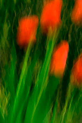 Red Tulips Print by  Onyonet  Photo Studios