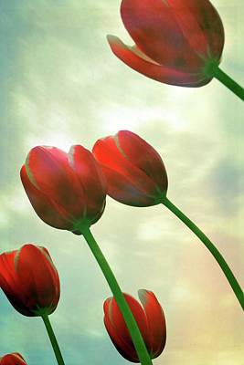 Outdoor Still Life Photograph - Red Tulips With Cloudy Sky by Michelle Calkins