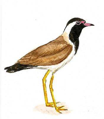Lapwing Painting - Red - Wattled Lapwing by Ketki Fadnis