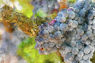 Red Wine Grapes On The Vine Print by Brandon Bourdages