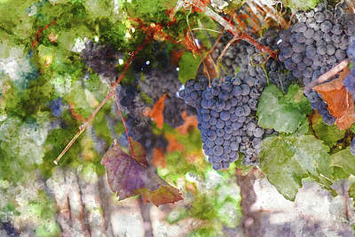 Napa Valley Digital Art - Red Wine Grapes On The Vine In Wine Country by Brandon Bourdages