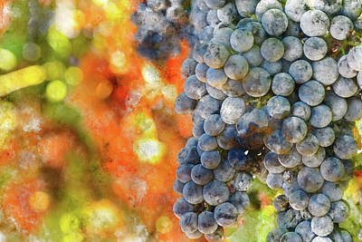 Wine Photograph - Red Wine Grapes With Colorful Leaves by Brandon Bourdages