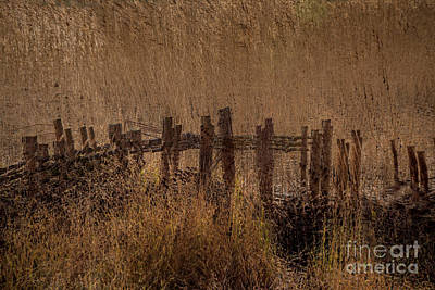 Reed Fence Print by Richard Thomas