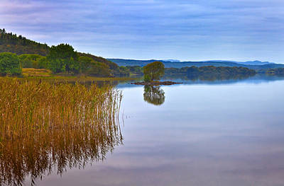 Reeds And An Islet In Lough Macnean Print by Panoramic Images