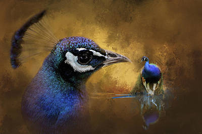 Peacock Photograph - Reflecting On The Past Peacock Art by Jai Johnson